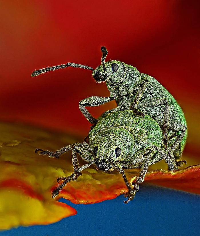 Fotos Microscópicas