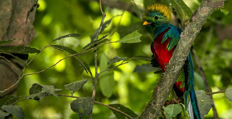 quetzal centroamerica