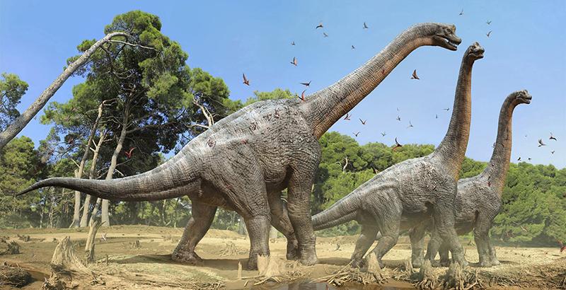 Que Dinosaurio Es Conocido Como El Rey Del Cretacico National Geographic En Espanol Try searching for another term or go back to the home. que dinosaurio es conocido como el rey