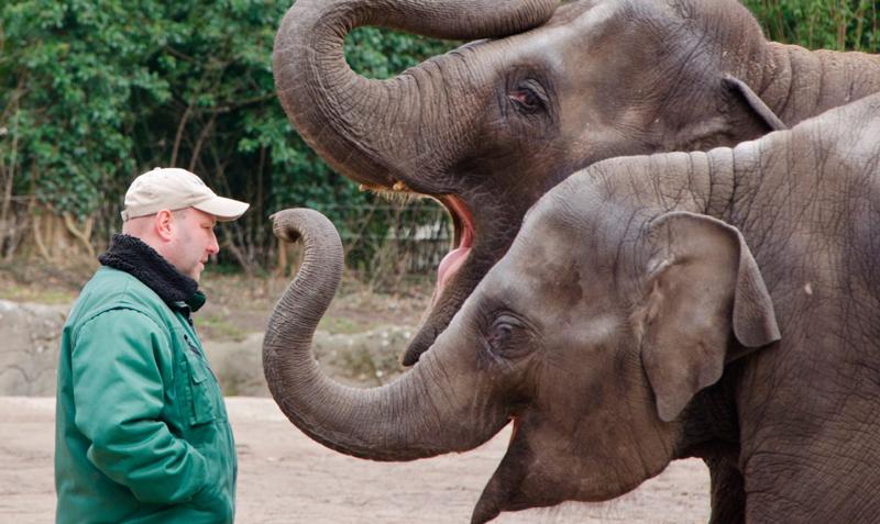 primer hospital elefantes 3 - India abre su primer hospital para elefantes