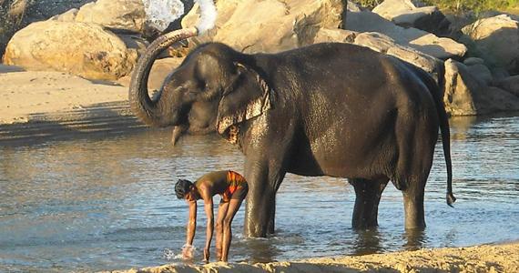 hospital para elefantes