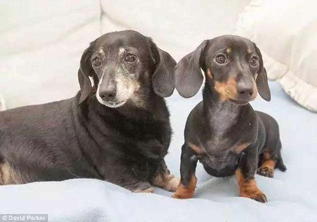 clonan mascotas