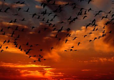 aves peligro de extinción