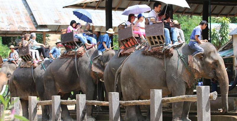 elefantes maltratados Tailandia