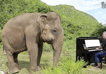elefantes maltratados