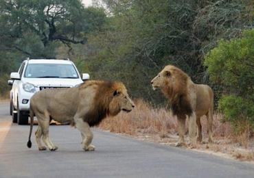 leones video