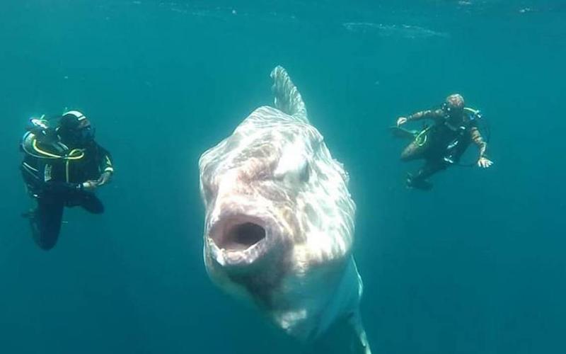 pez gigante chile