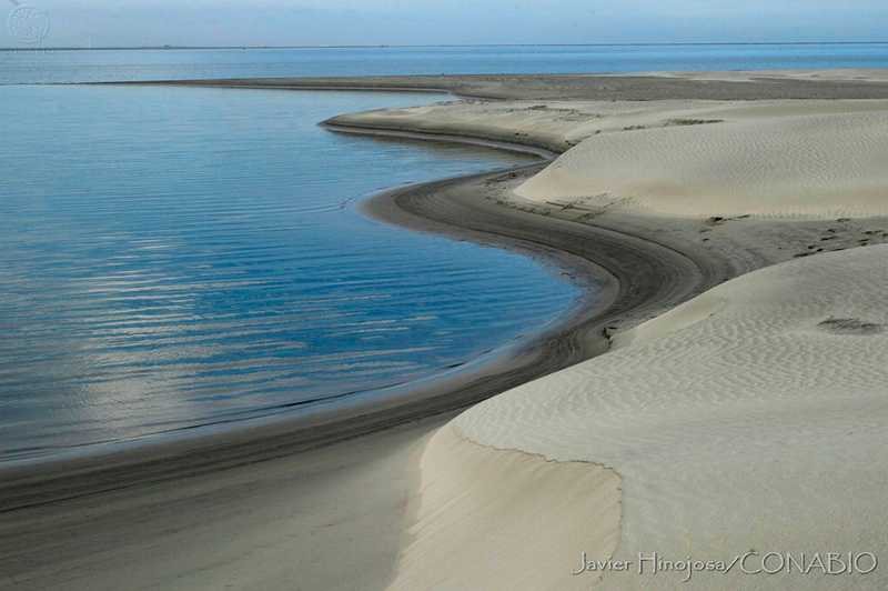El Vizcaíno Baja California Sur