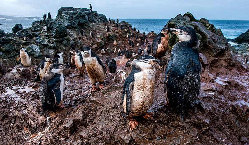 pingüinos Antártido