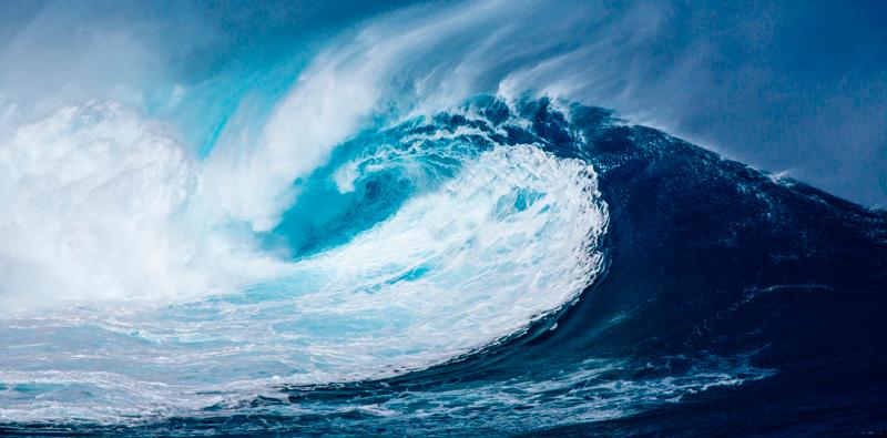 mar fitoplancton cambio climático