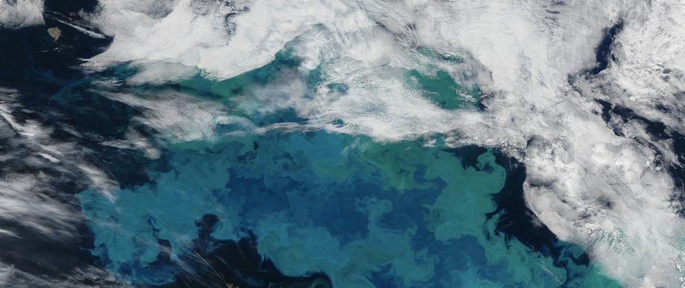 mar cambio climático fitoplancton