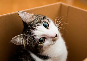 gatos gato caja
