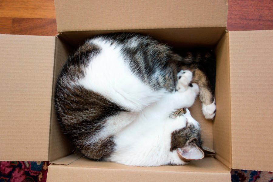 gatos caja