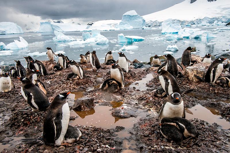 pingüinos Antártida