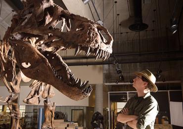 Tyrannosaurus rex Scotty