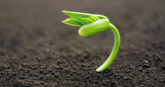 planta semilla