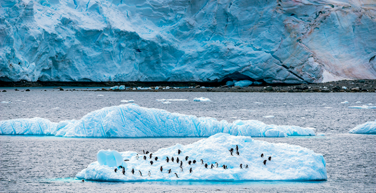 Antártida pingüinos