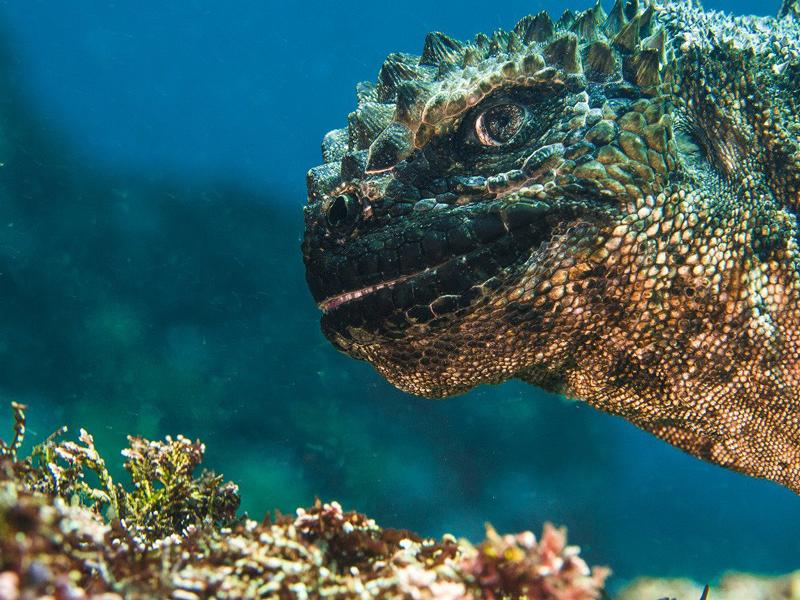 fotografía bajo el mar