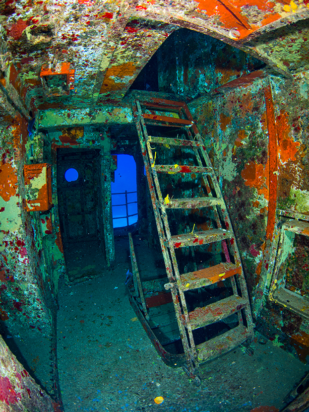 Kittiwake naufragio