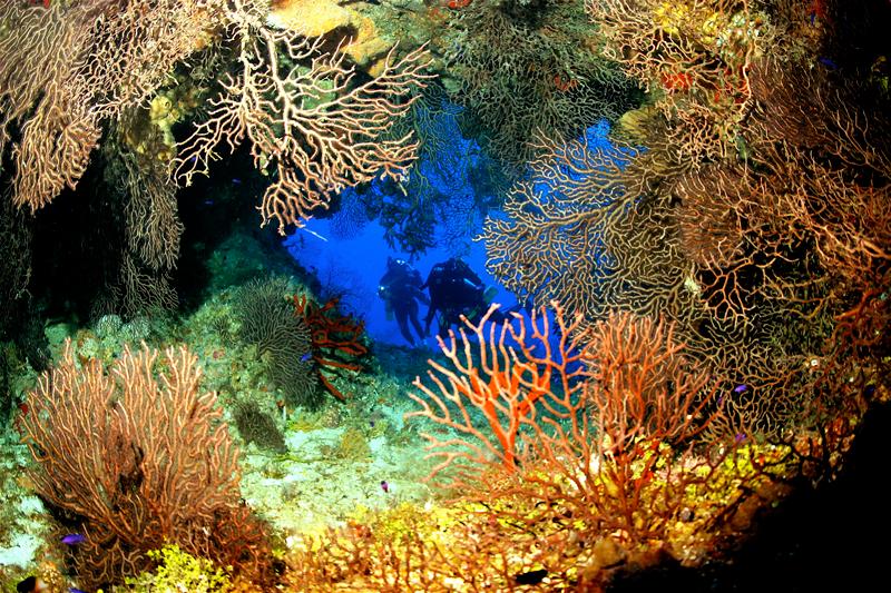 Islas Caimán coral arrecife
