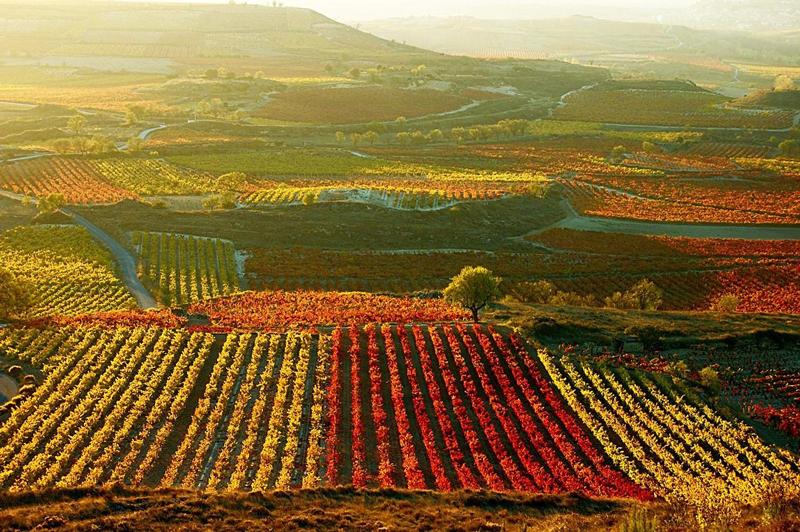 vino La Rioja España