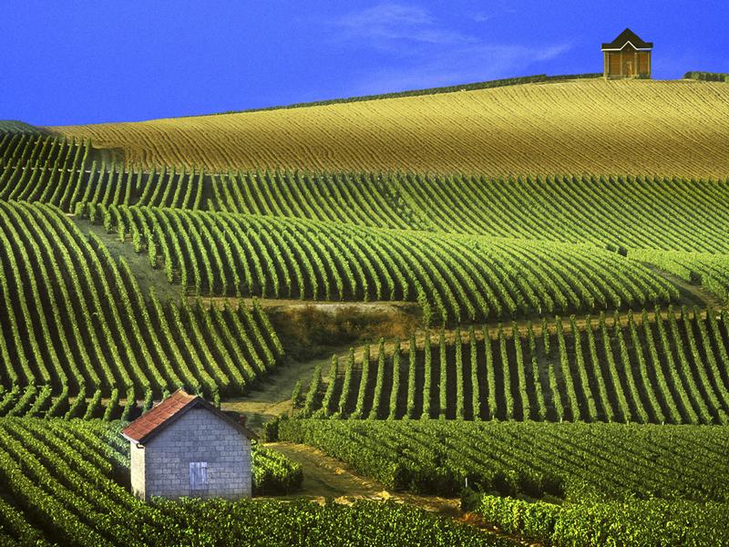vino Champagne Europa