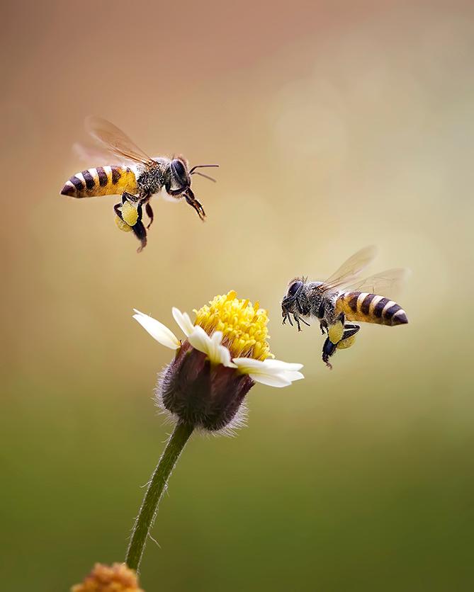 datos abejas