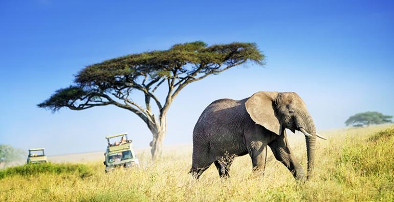 Botsuana caza elefantes