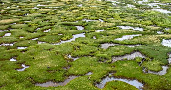 humedal Llanos de Moxos