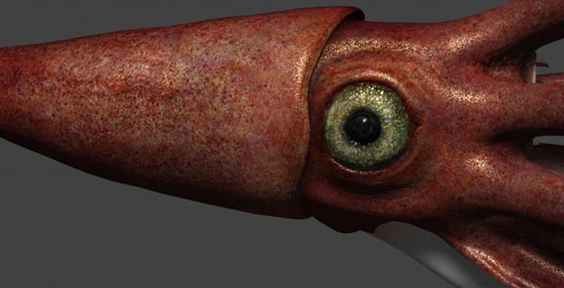ojos calamar gigante