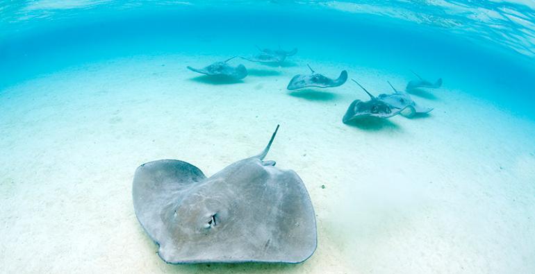 Rayas Islas Caimán