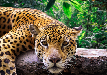 La Amazonía