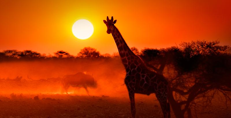 Los Animales Pueden Sufrir Quemaduras De Sol National Geographic En Espanol