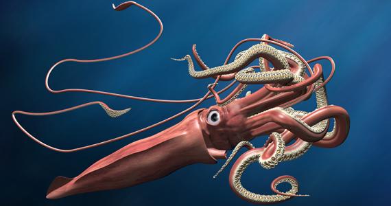calamar gigante Golfo de México