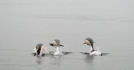 delfines lisos