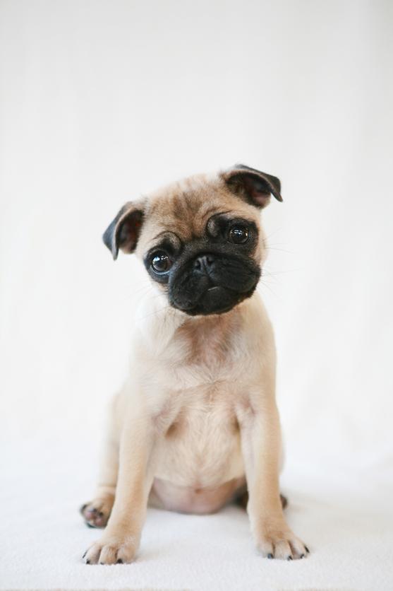 mirada irresistible perros
