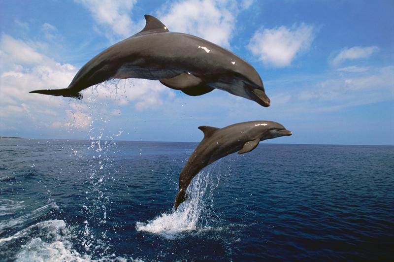 delfines eclipse