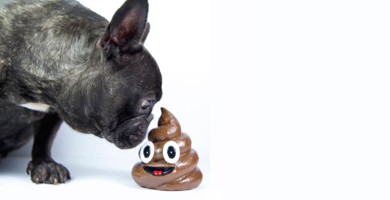 Por Qué Los Animales Incluso Tu Perro Comen Excremento National Geographic En Español