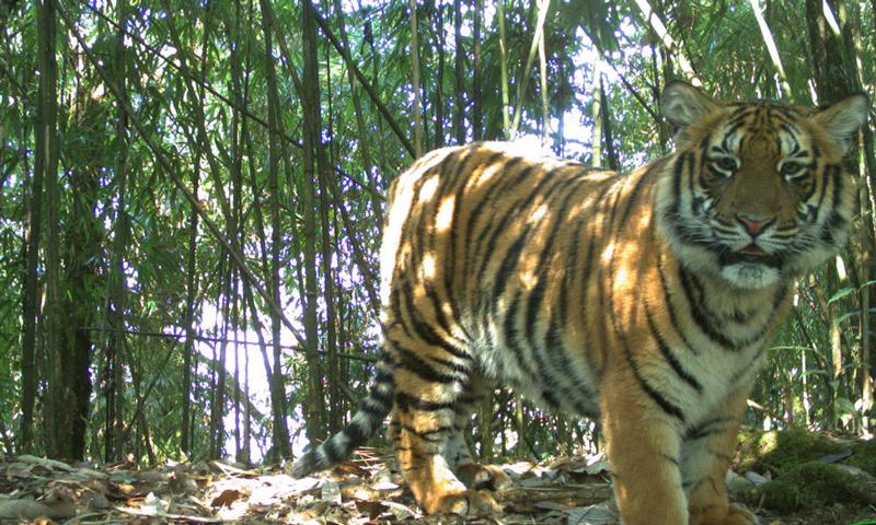 WWF Bután Tigres