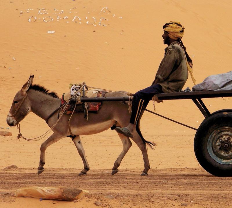 camellos Tamegroute África