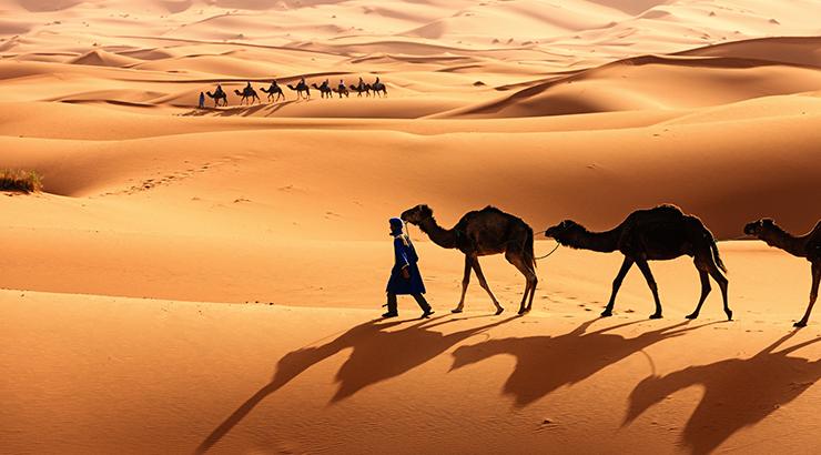 camello Sahara
