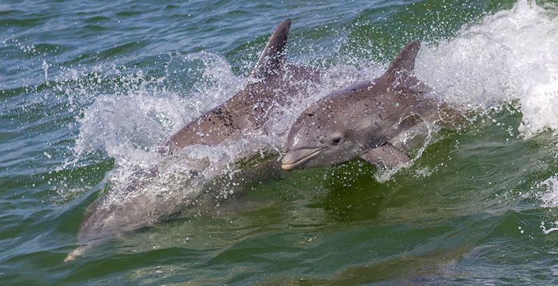 delfines delfín cría