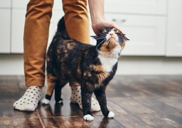 gato vacuna gatos