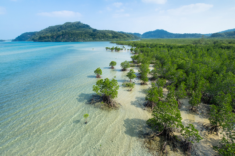 manglares importancia