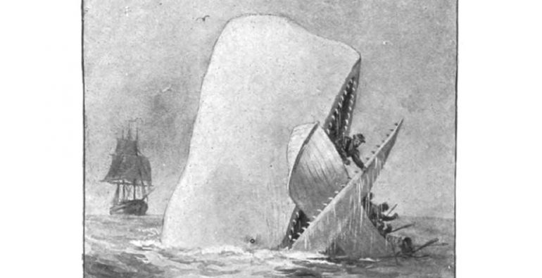 Moby Dick Mocha Dick