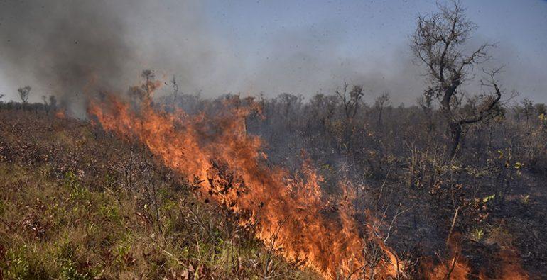 Bolivia incendios animales