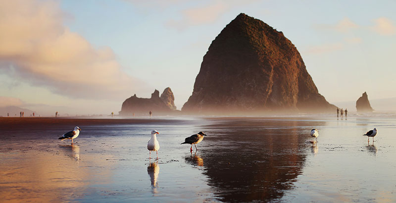 Image result for cannon beach