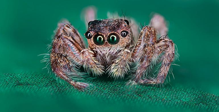 ojos arañas