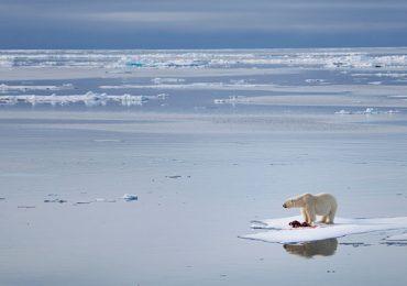 Artico cambio climático oso polar
