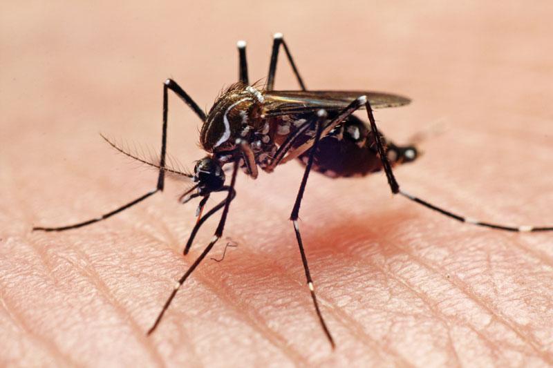 Virus mortal mosquitos EEE Estados Unidos